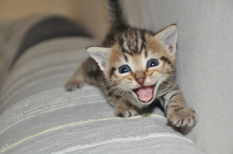 kitty giggling